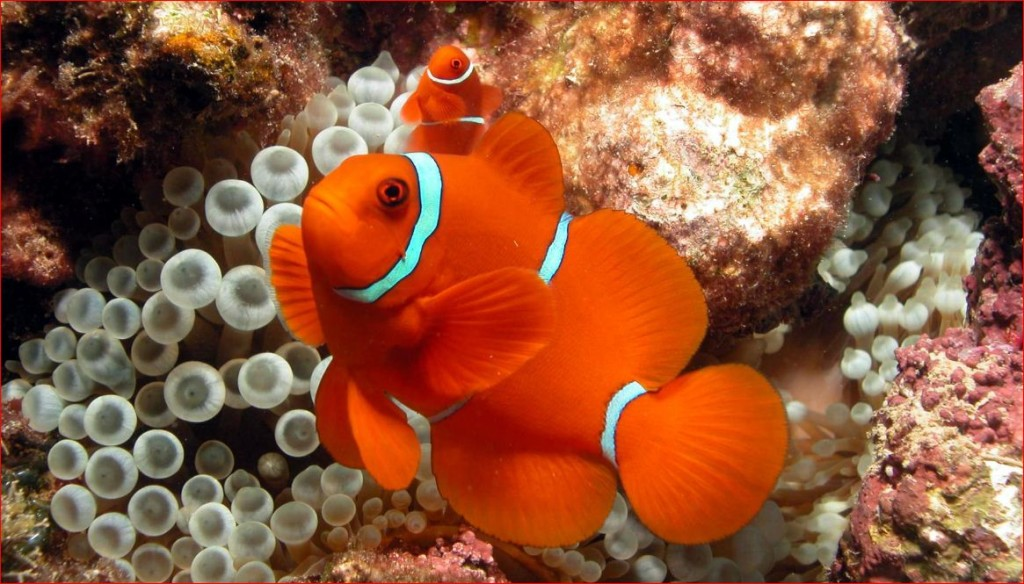 reef-tours
