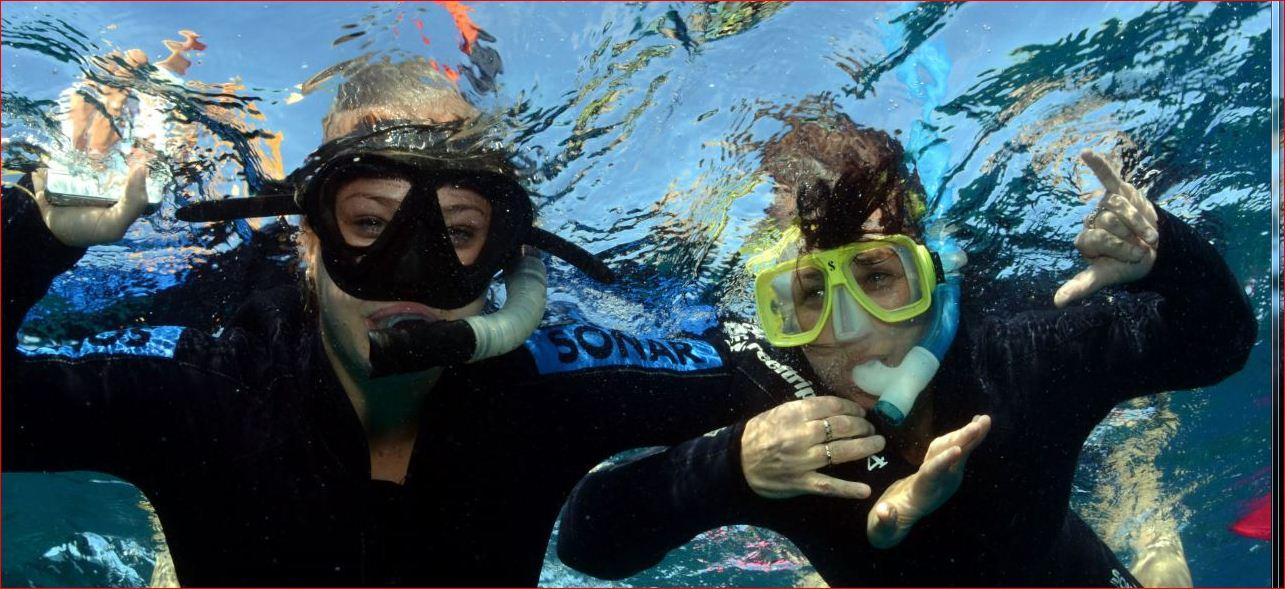 snorkel reef trips