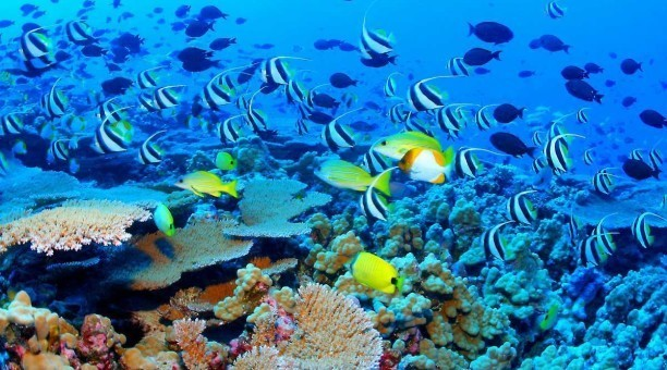 Breathtaking Outer Great Barrier Reefs