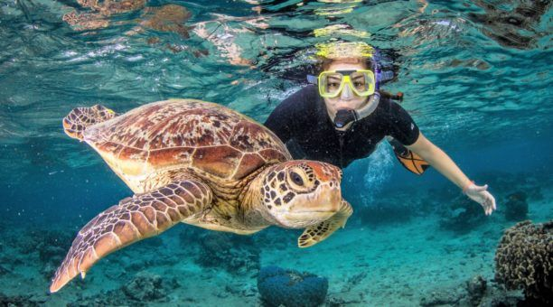 Guided snorkel tours