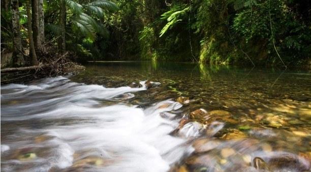Daintree Rainforest Australia