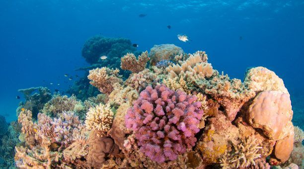 Outer Great Barrier Reef